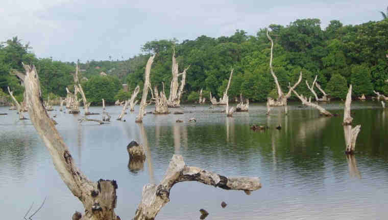 Dead forest boracay